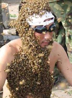 пчелиный подмор от диабета